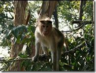 monkey in rajiv gandhi wild life sanctury