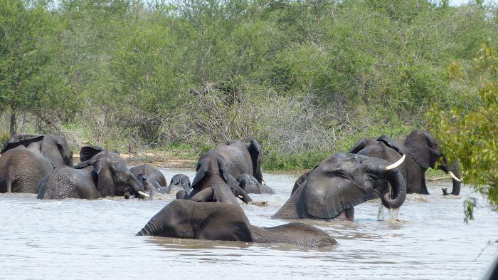 Elephantenbad