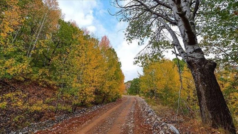 Salördek Forests Wear Dress of Autumn Colors (2)