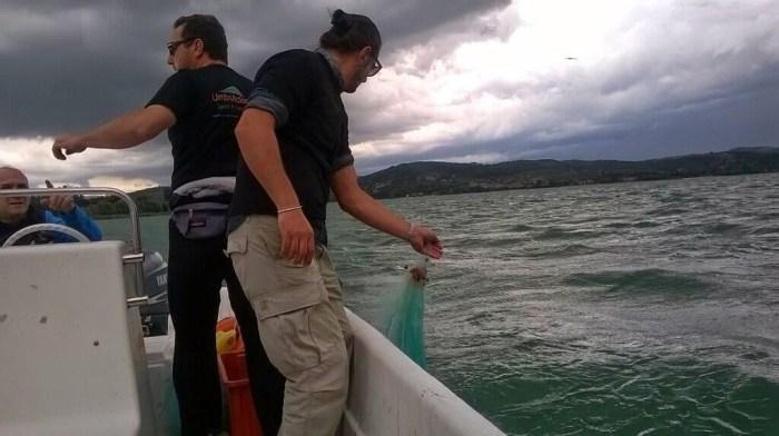 Battuta di pesca sul Lago Trasimeno