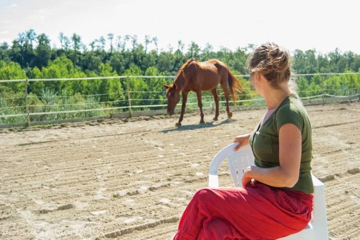 Nel recinto con i cavalli