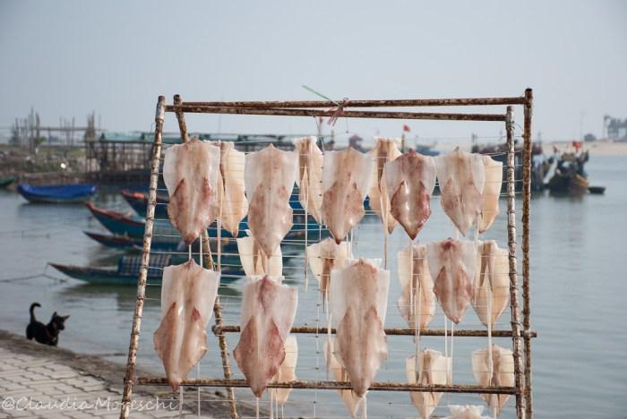 calamari-al-sole-dong-hoi
