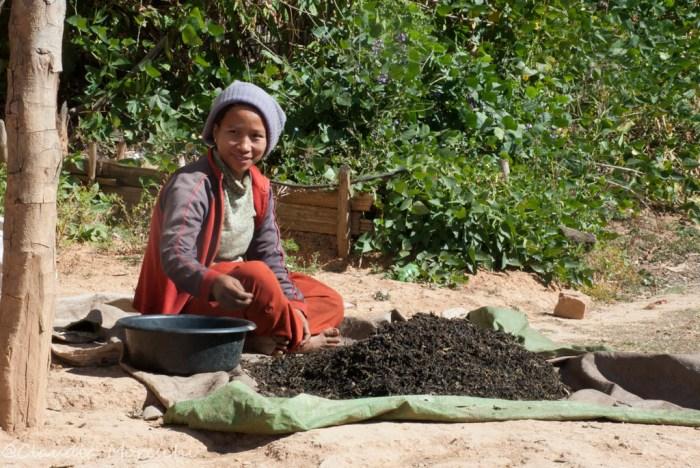 Trekking a Kalaw: foglie di tè stese al sole!