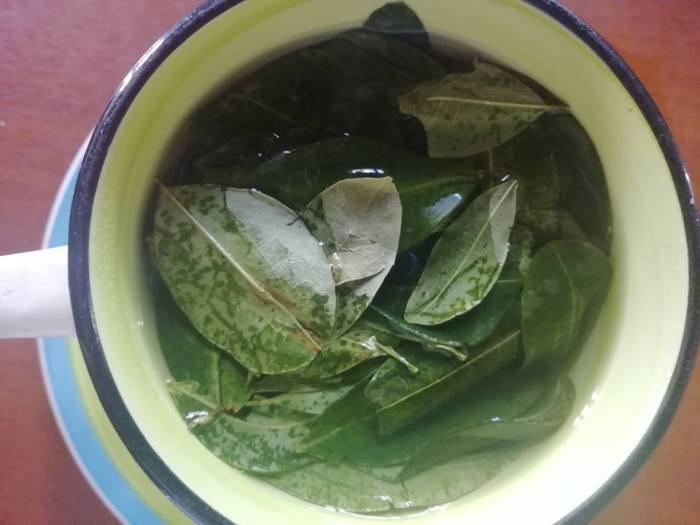 L'infuso con le foglie di coca
