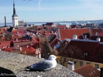 Vista su Tallinn dalla città vecchia