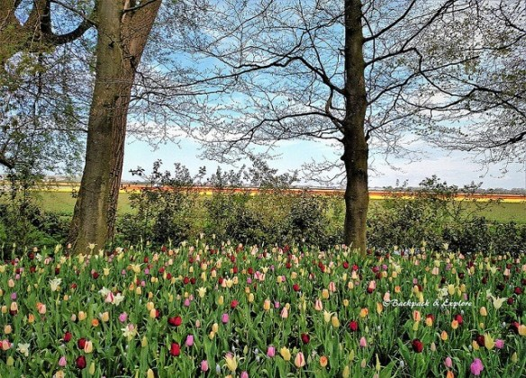 best day trips from Amsterdam | Lisse