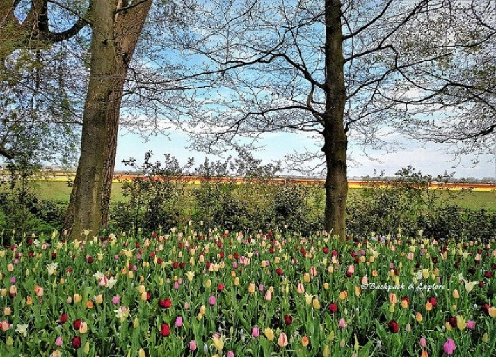 best day trips from Amsterdam   Lisse