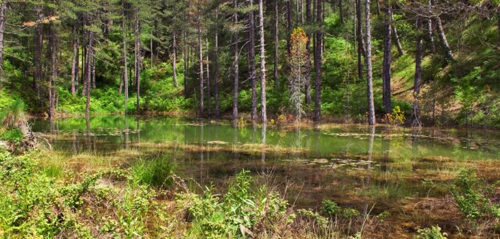 λίμνη Ζορίκα στο Ζαγόρι στη μέση του δάσους