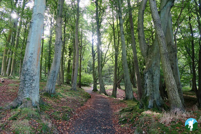 lomond forest things to do in falkland