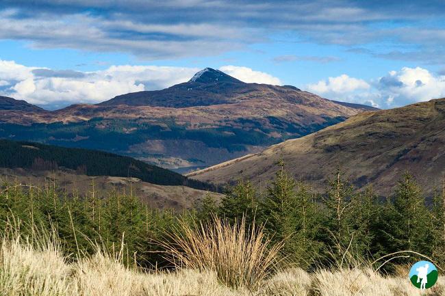 view from ben arthur to loch lomond