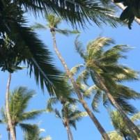 Palms on Ngapali, Myanmar