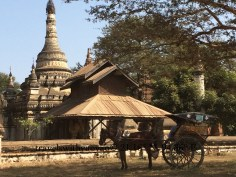Horse Travel in Bagan, Myanmar (Burma)