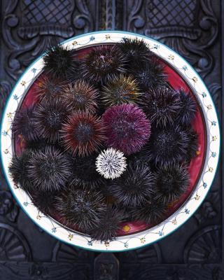 Sea Urchins in Pantelleria