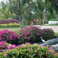 Bali Hyatt in Sanur