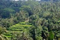 Jatiluwih Village - Unesco World Heritage Site