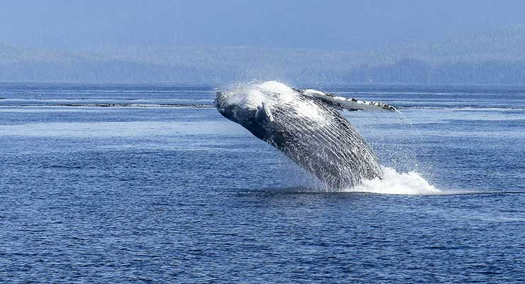 Top Countries For Best Outdoor Activities Canada whale watching 740x400