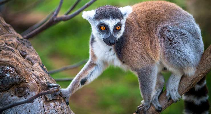 Top Countries For Best Outdoor Activities Madagascar 740x400