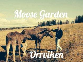 Moose Garden near Östersund