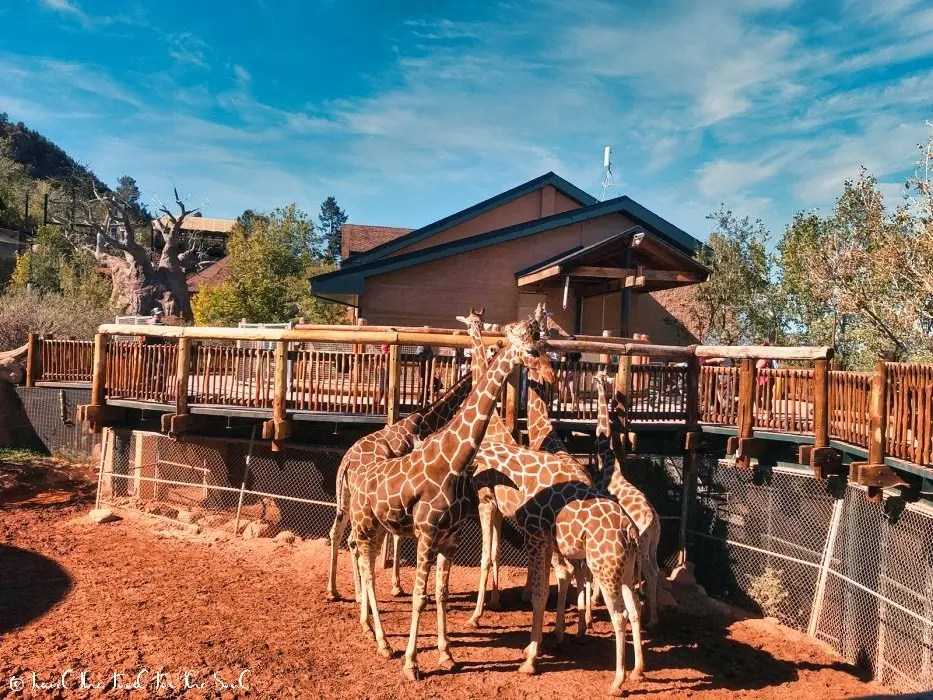 Getting To Cheyenne Mountain Zoo