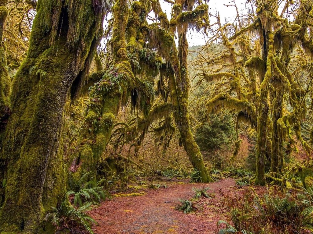 Olympic National Park Rainforests
