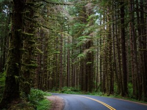 Planning Your Trip To Olympic National Park