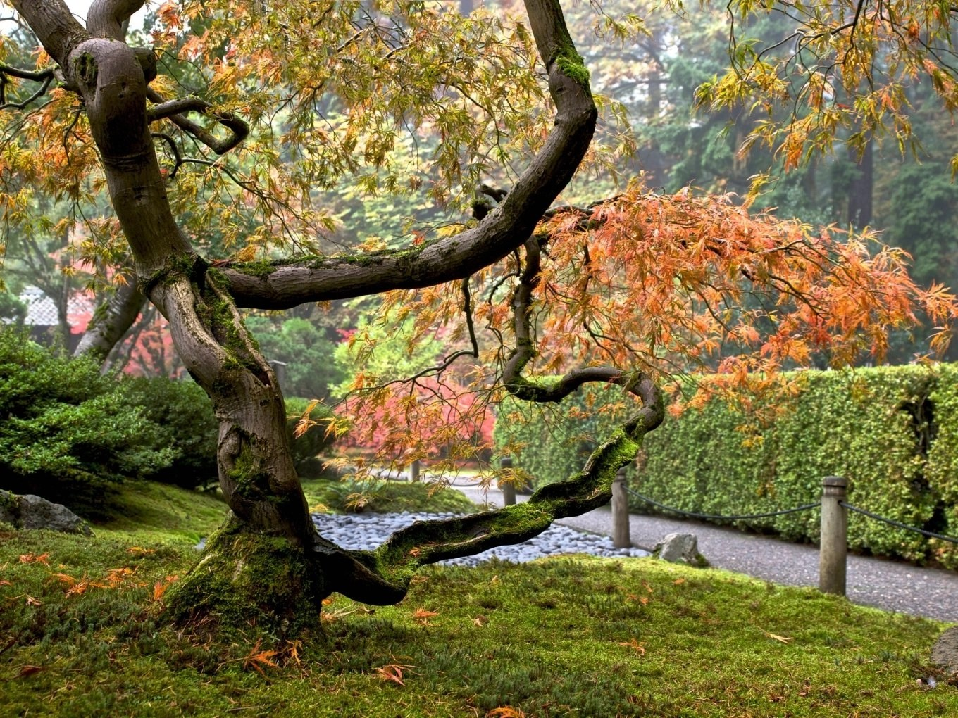 Planning Your Trip To Portland Japanese Garden