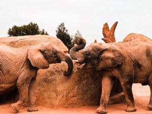 Saint Louis Zoo | Missouri Travel Guide