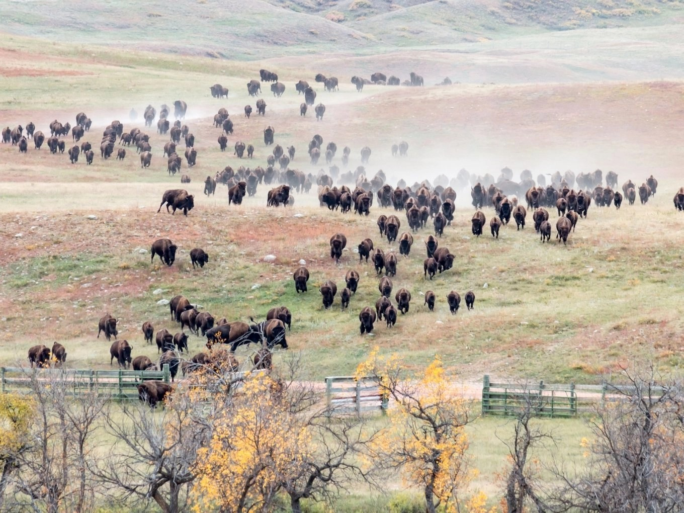 Things To Do In Custer State Park