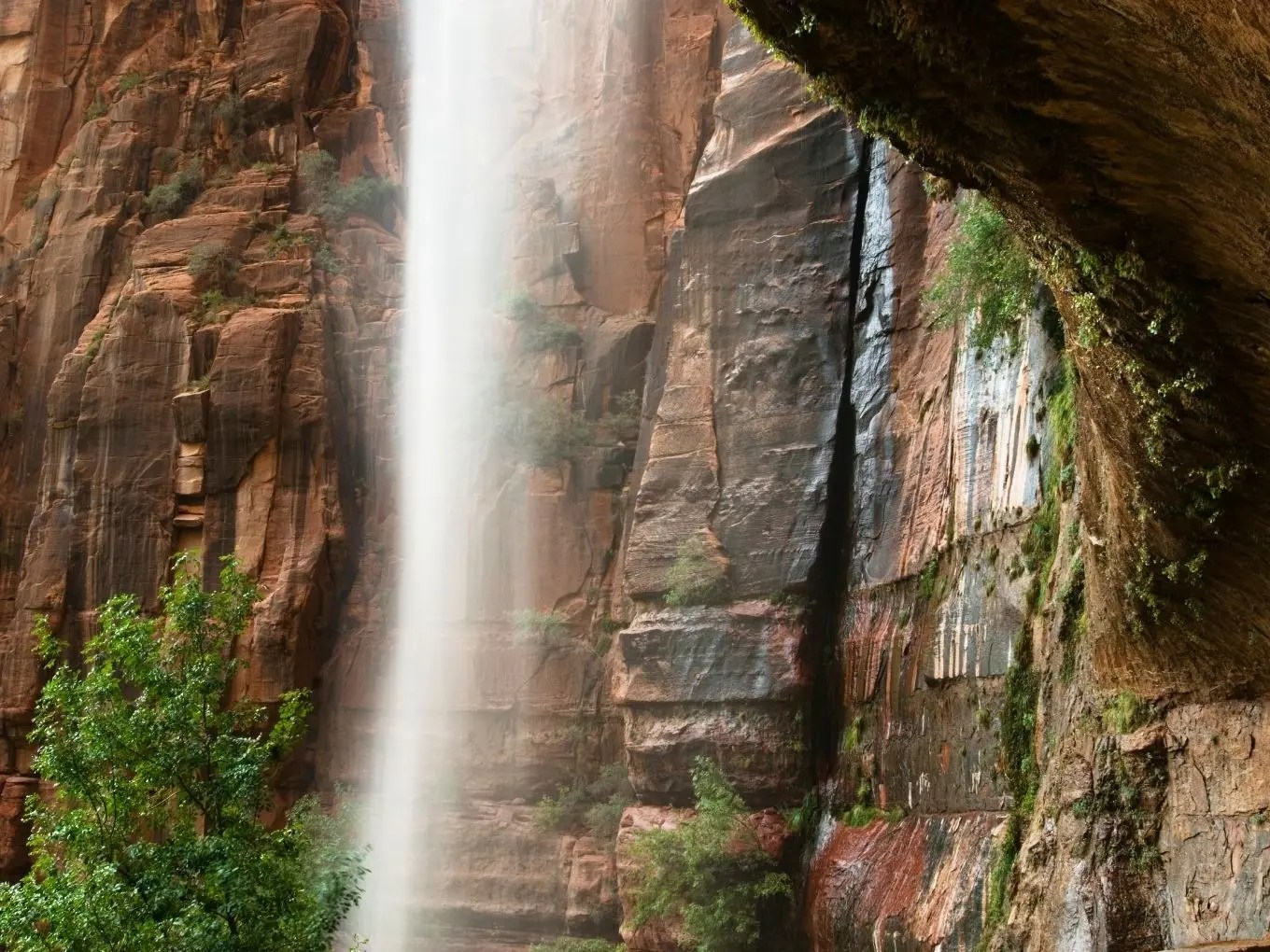 Weeping Rock | Zion National Park