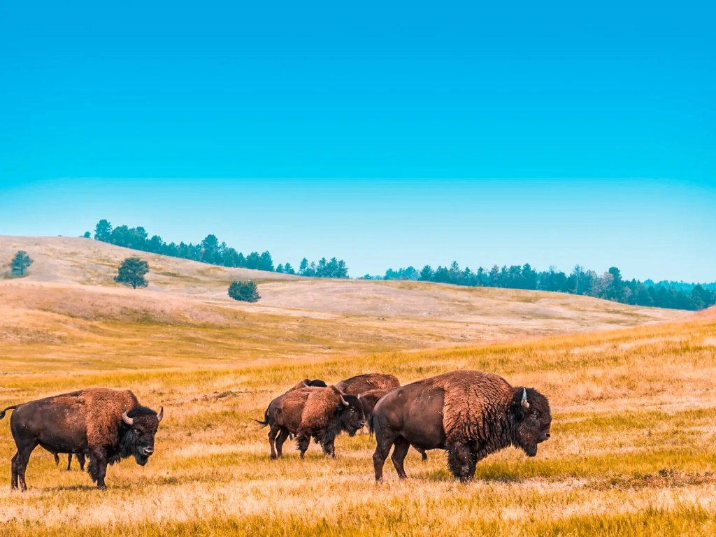 Wichita Mountains Wildlife Refuge | Oklahoma Travel Guide