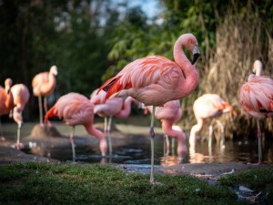 Pittsburgh Zoo | Pittsburgh