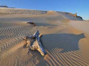 Silver Lake Sand Dunes   West Michigan