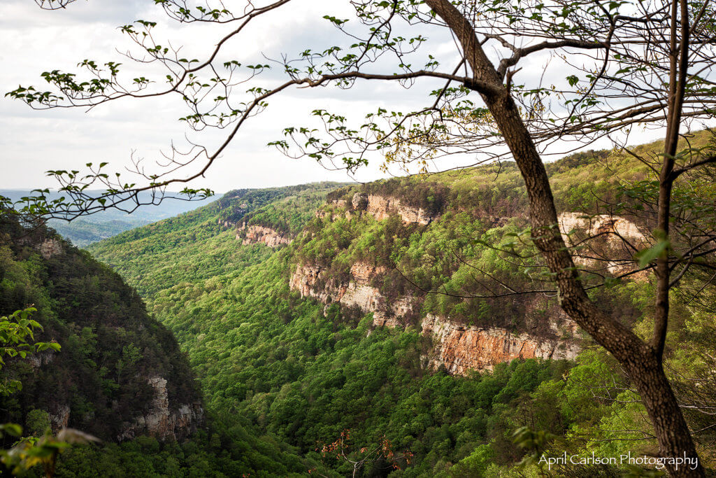 Visiting Cloudland Canyon State Park: View of Canyon