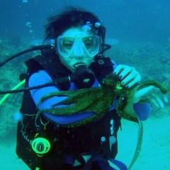 Best Diving Spots in Hawaii