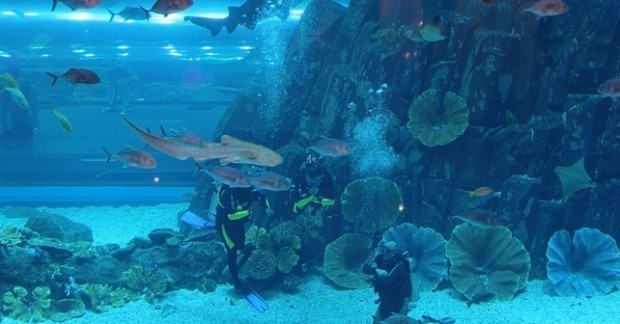 scuba-diving-snorkeling-dubai-620x324