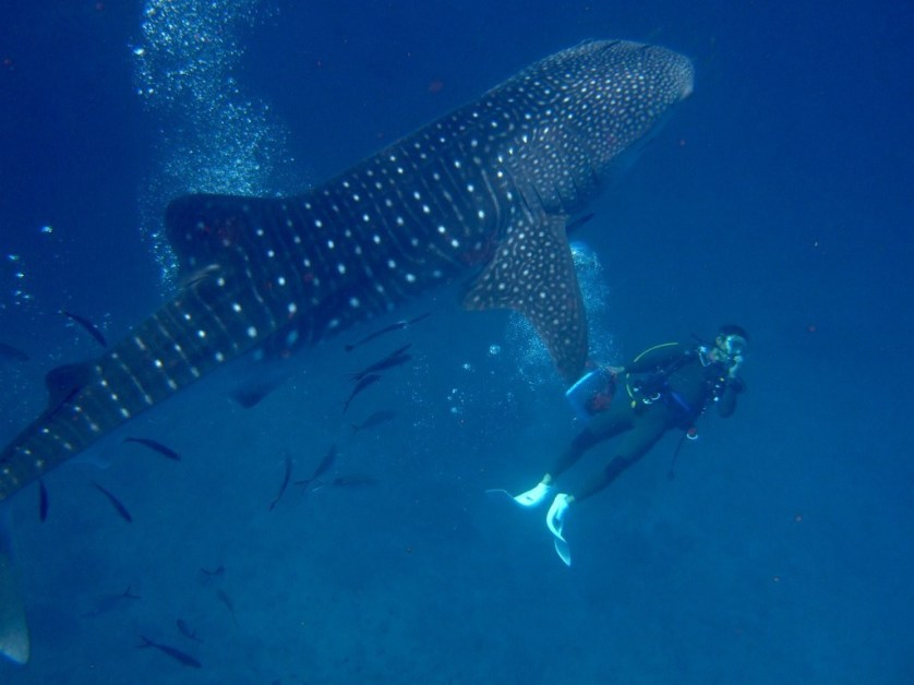 Surin Islands Scuba Diving