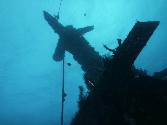 Scuba Diving In Playa Del Carmen wreck