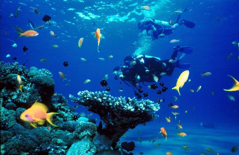 Pondicherry scuba diving