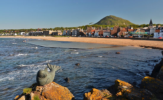 Seals And Seabirds – North Berwick
