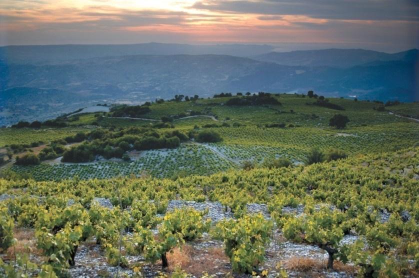 cyprus wine tasting