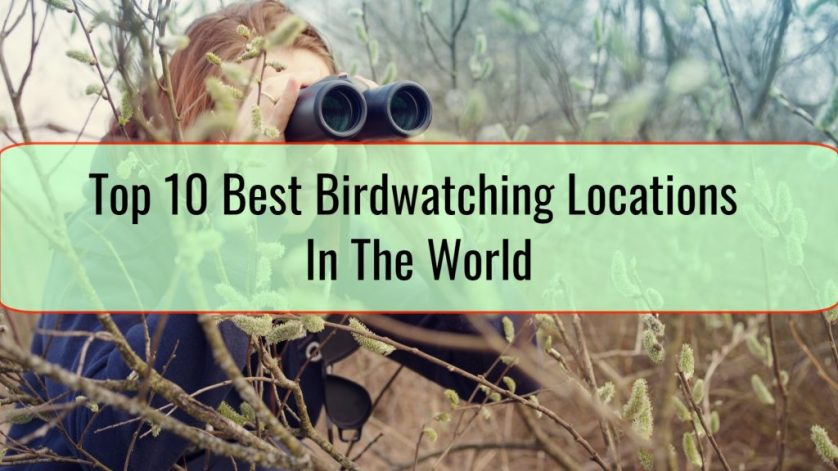 Top 10 Best Birdwatching Locations In The World