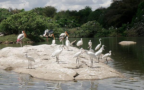 Ranganathittu Bird Sanctuary 2
