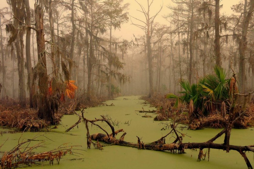 Explore Manchac Swamp