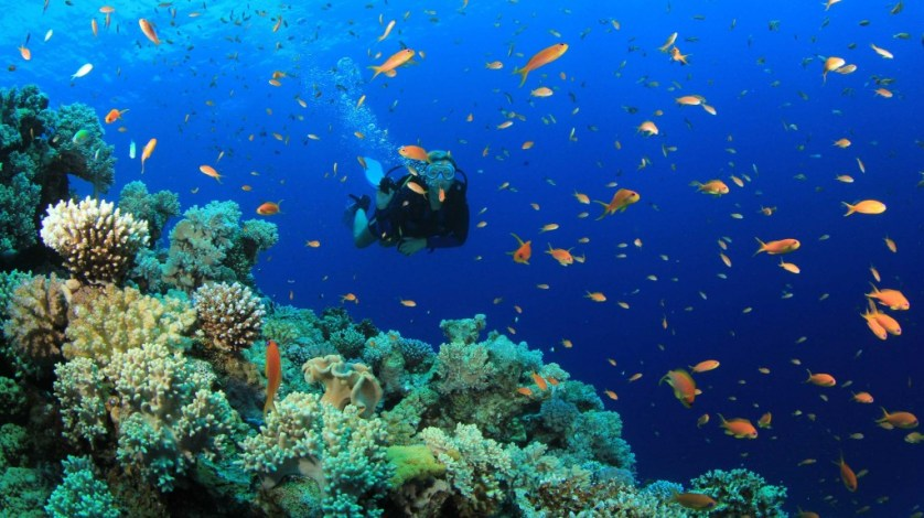 La Paguera Snorkeling