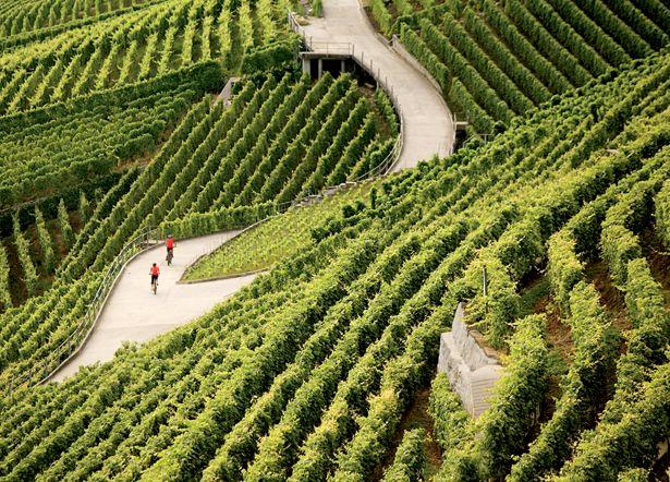 Biking Around Lake Geneva Vineyards