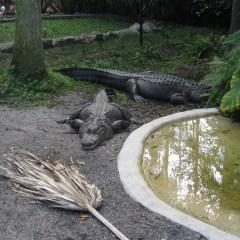 Best Wildlife Watching In Fort Lauderdale, Florida