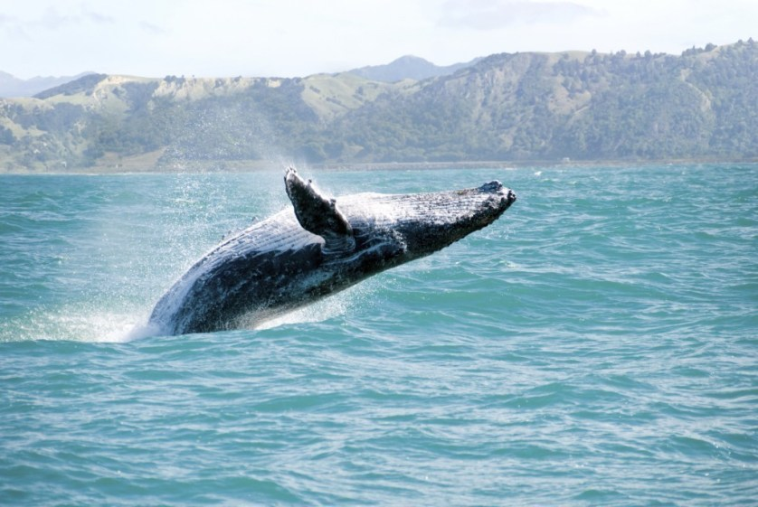 Shore Whale Watching In Maui
