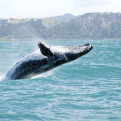 Maui Whale Watching Options For A Memorable Trip
