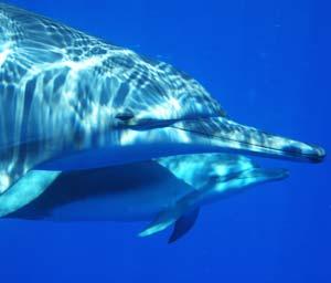 Kailua-Kona – Dolphin Journeys