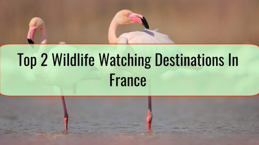 Top 2 Wildlife Watching Destinations In France